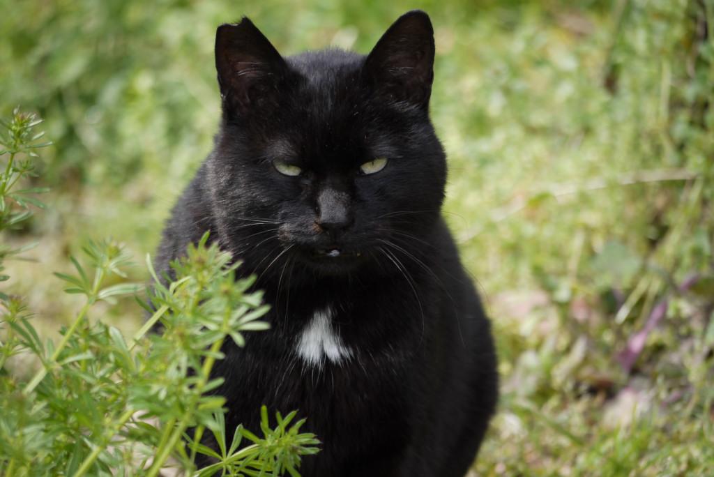 ガットリベロ(自由猫):cool &...